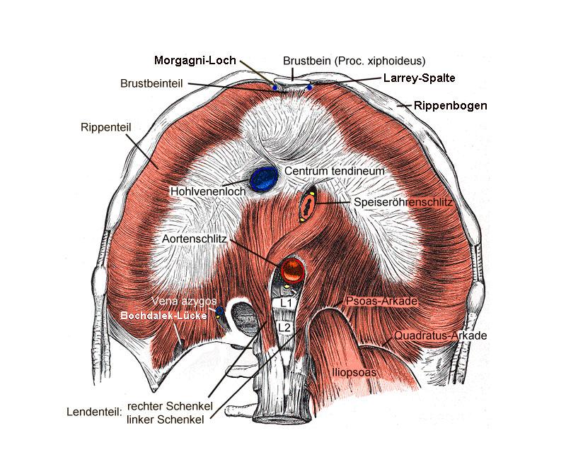 Symptome eingeklemmtes zwerchfell Herzstolpern, Herzrasen,